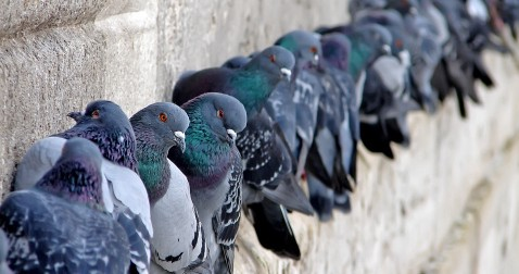 Welp, Pigeons Can Read. Is There Anything More Unsettling?