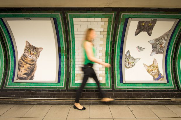 Every Ad In This London Tube Station Was Replaced With Cats For The Best Reason Ever