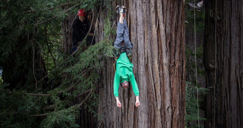There's A School In Oregon That Teaches You To Be Tarzan