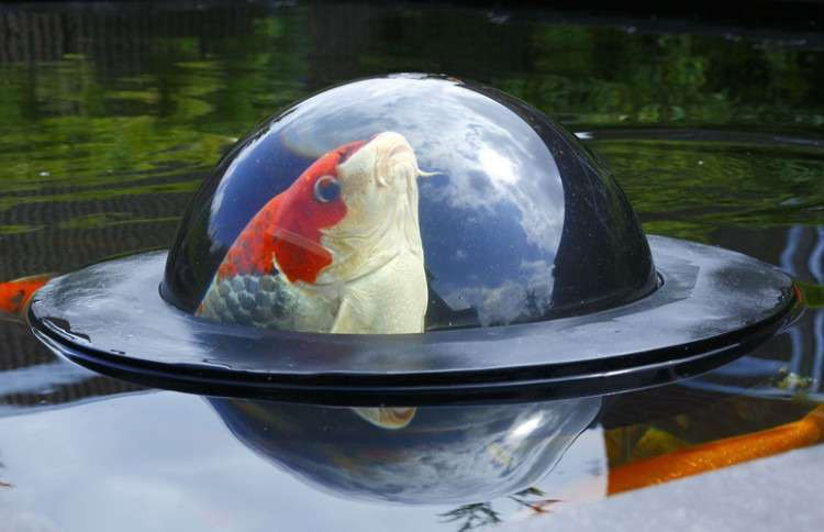 This Floating Dome Lets Fish Be Part Of Our World