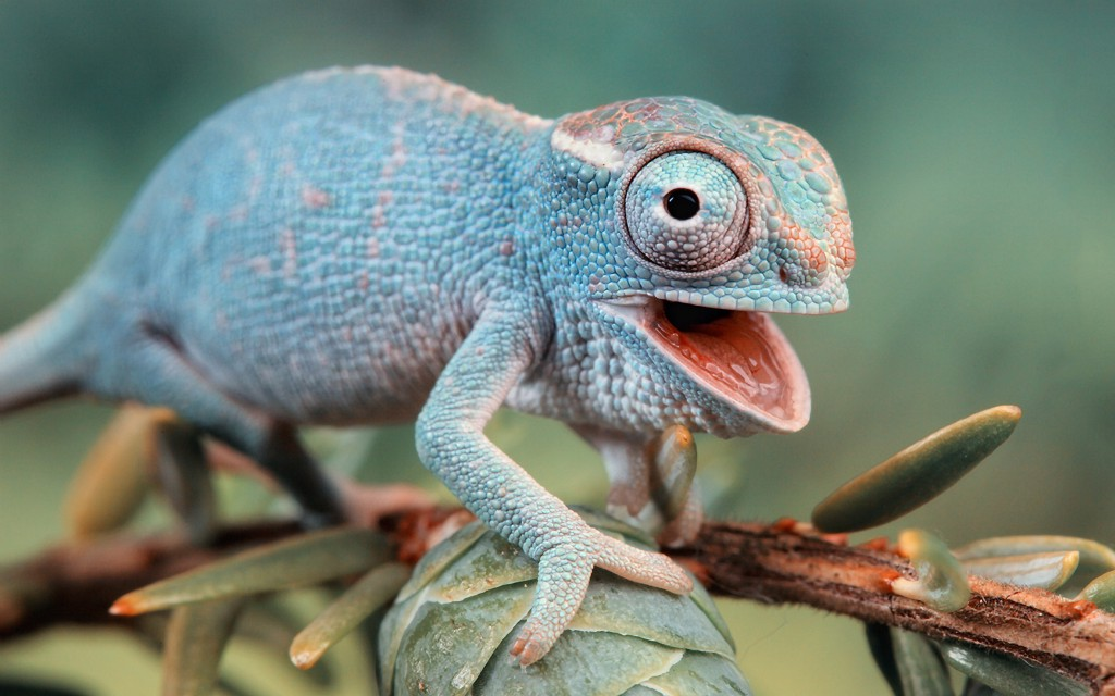 This Is Why Chameleons Change Color
