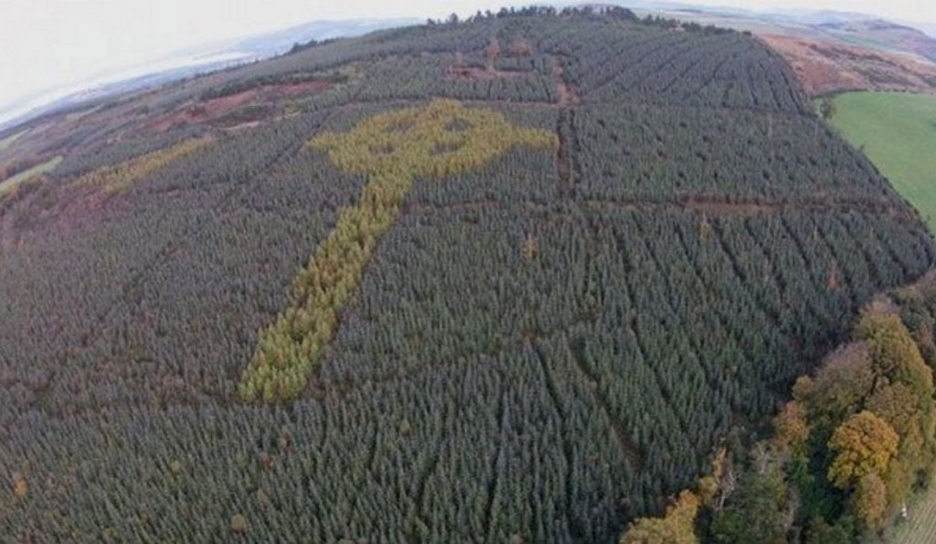 Why Is A Huge Cross Secretly Growing In An Irish Forest?