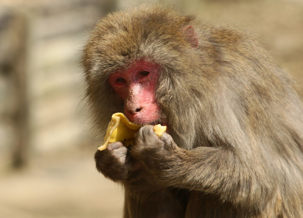 Humans Have Big, Powerful Brains Thanks To Fruit, Science Says