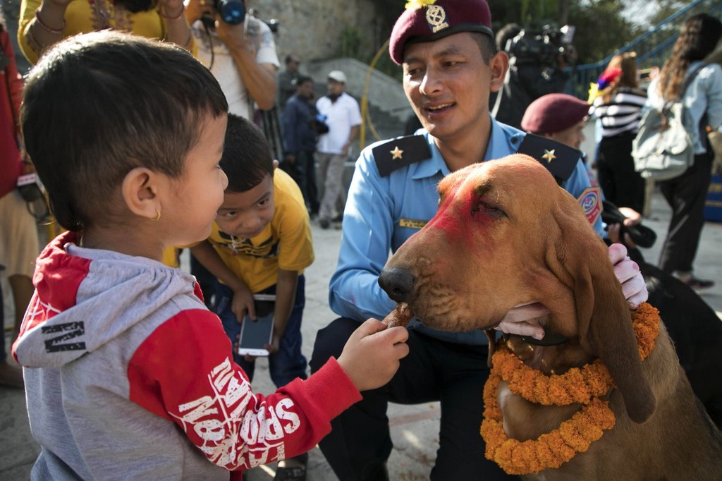 This Festival In Nepal Worships Dogs And You Have To See The Photos